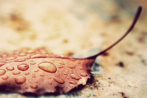 有你的日子,雨,总会不期而至