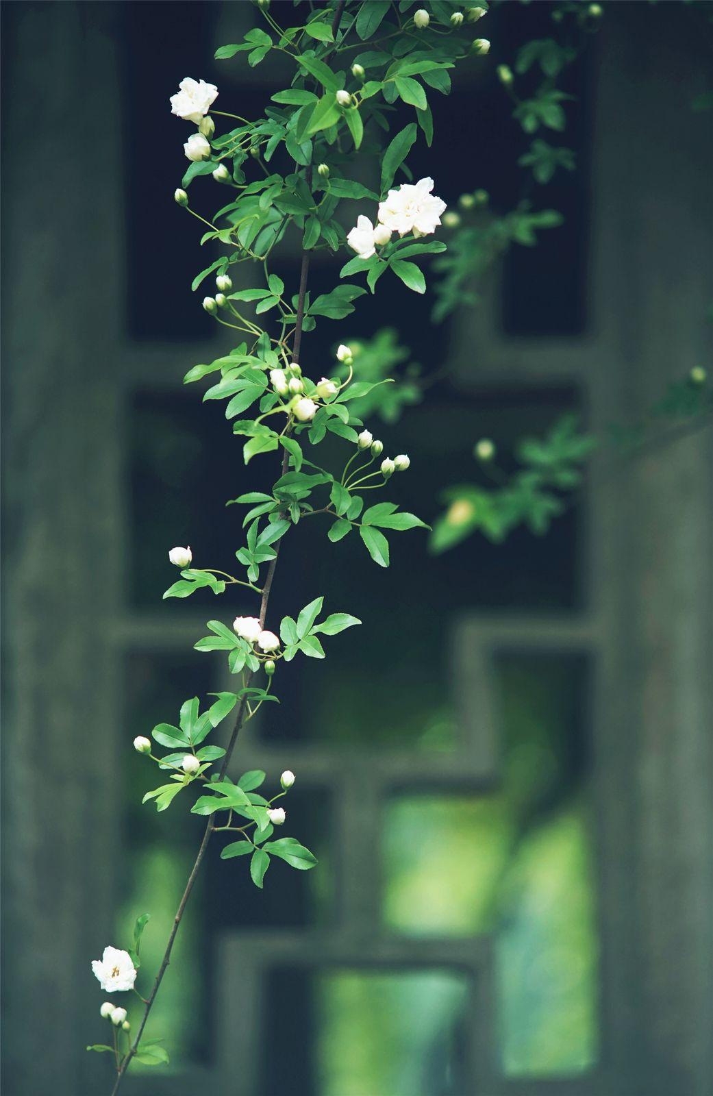 关于植树节的温馨祝福语