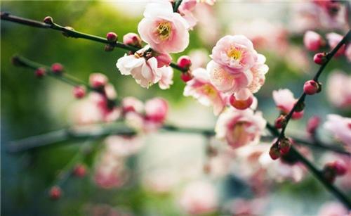 感慨春天万物复苏的句子