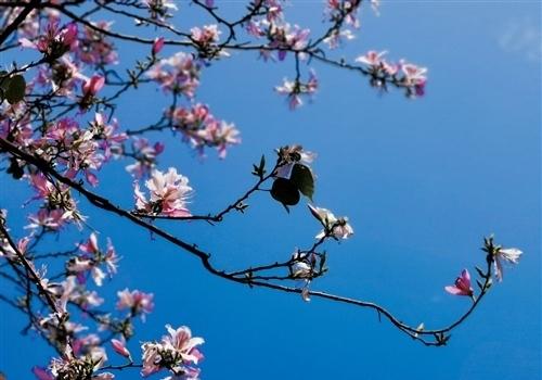春天赏花的心情句子