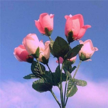 谈恋爱的话 一株是宝贵的春夏过后