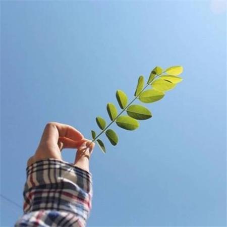 感悟人生的句子 每个人都有自己的优点和缺点