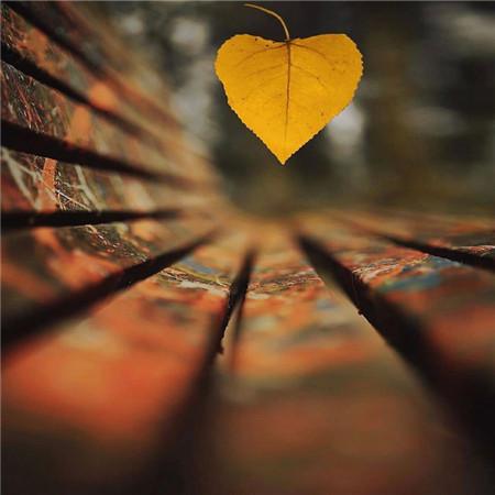 短一点的情感语录 记得永远把我放在你心里