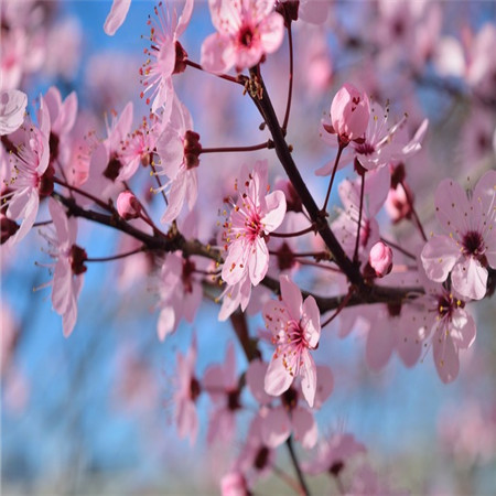 抖音最火句子 她投入了春天的怀抱
